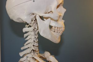 כיצד תזונה משפיעה על התפתחות אוסטיאופורוזיס?
